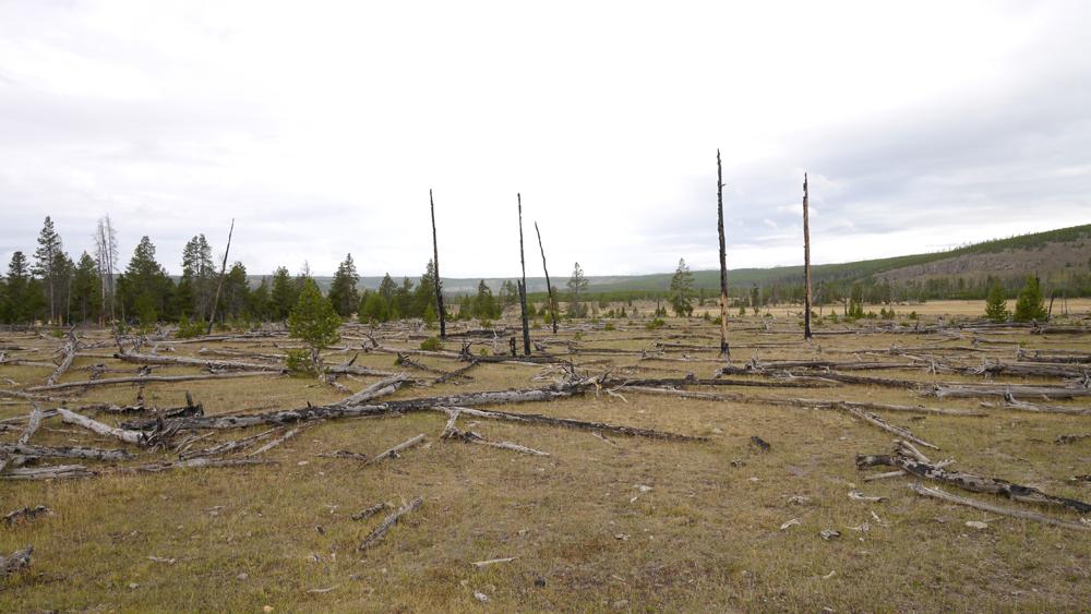 山火事は森の新陳代謝